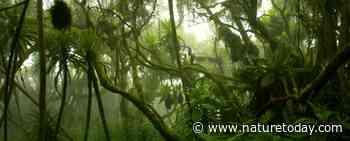 Nieuwe methode concludeert: een derde van alle tropische Afrikaanse planten mogelijk met uitsterven bedreigd