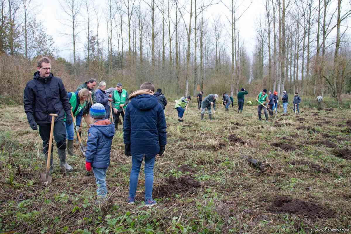 2500 jonge boompjes verrijken Scheldevallei in Moerzeke