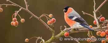 Help vogels met 7 alledaagse daden