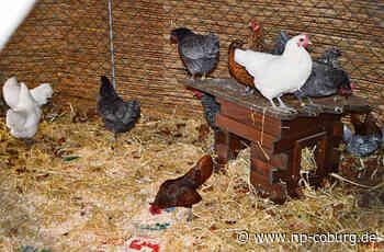 15 Hühner aus einem Stall gestohlen