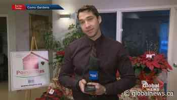 Poinsettias for palliative care patients