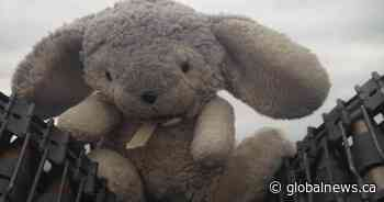 'Sigh of relief' for father who lost toy bunny during Burlington flight