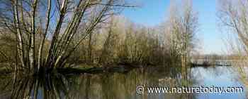 Natuurorganisaties en riviersectoren lanceren toekomstplan Ruimte voor Levende Rivieren