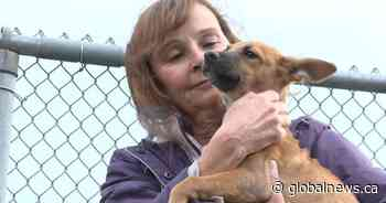 Humane Society of Durham Region rescues Dorian's canine survivors: 'We knew we had to help'