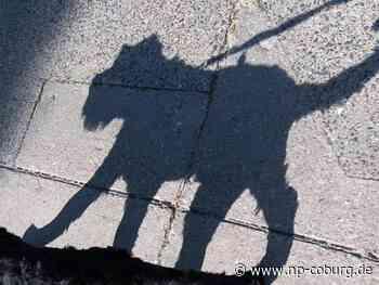 Herrenloser Hund beißt Spaziergängerin