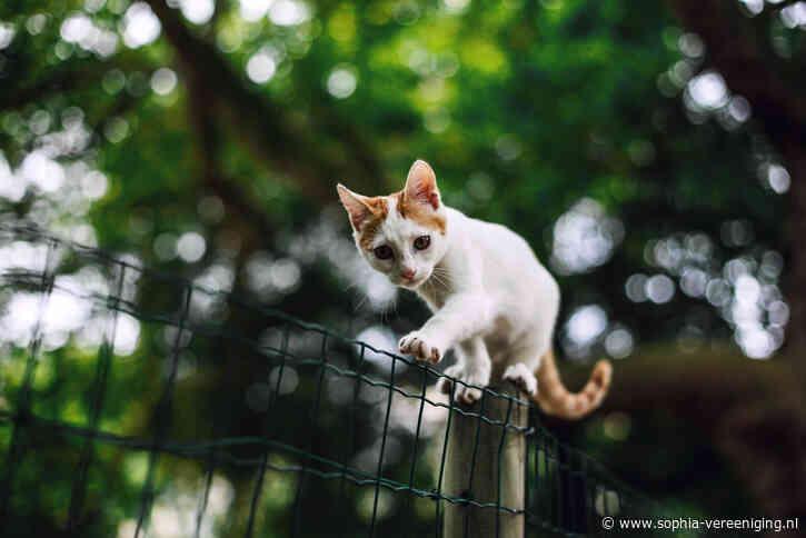 Castratieplicht katten oplossing voor 'vogelmoorden'