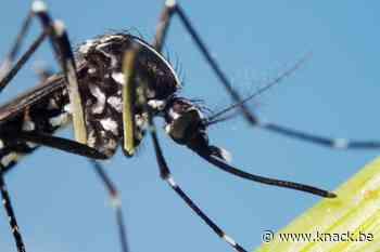 Opnieuw tijgermuggen gespot in België