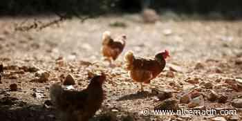 La région Paca placée en première position en matière de dynamique agricole bio