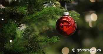 Bah humbug! There is a shortage of Christmas trees in Ontario