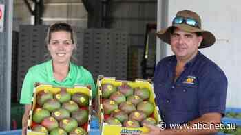 Mango trade falls as Hong Kong protests continue