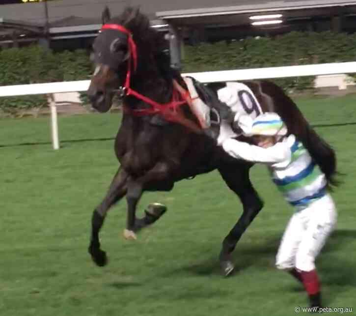 Australian Horse Shatters His Leg and Dies in Hong Kong Race