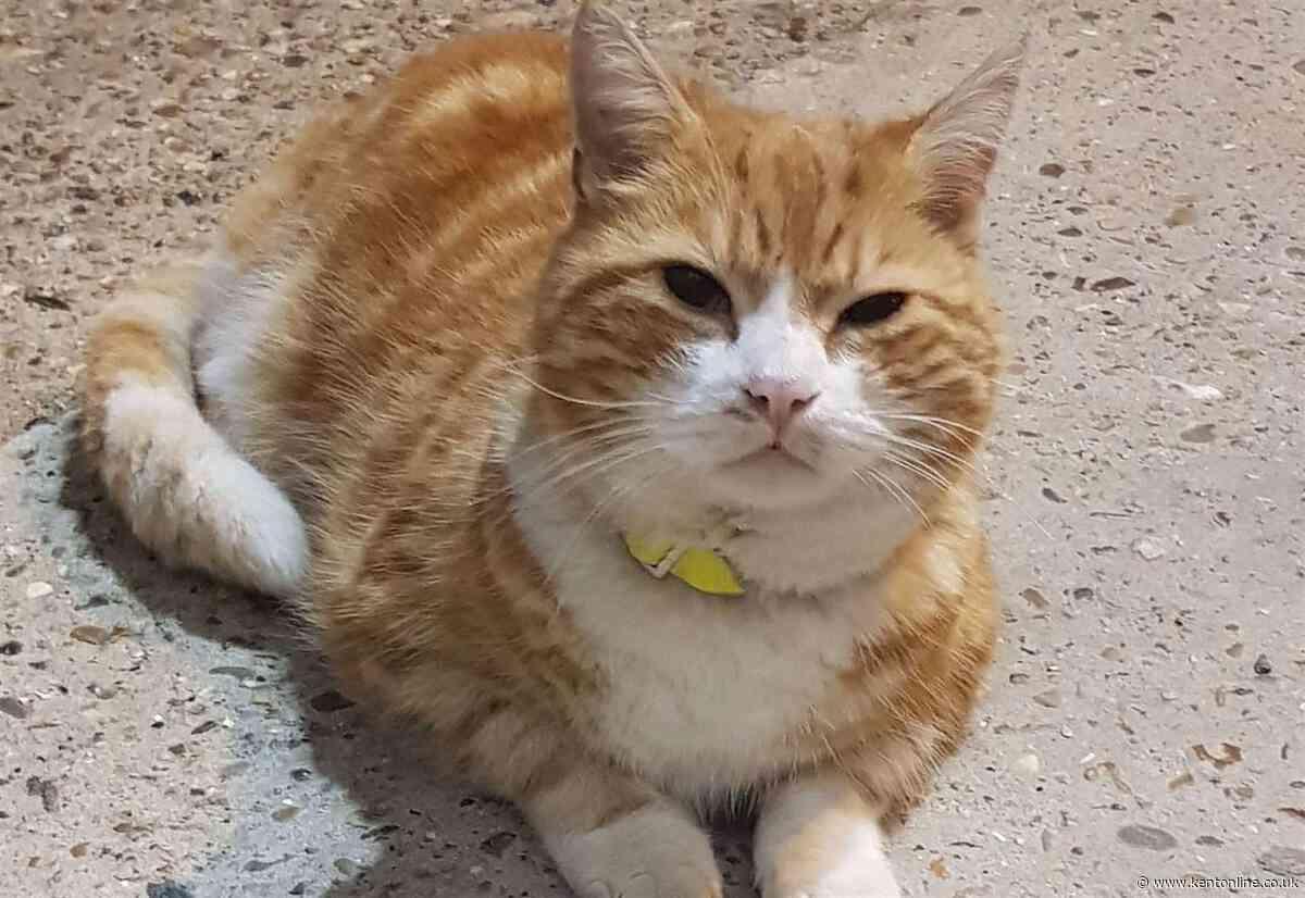 Three-legged railway cat goes missing