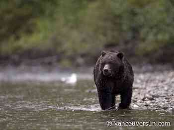 B.C. tour company ordered to pay $35K for using bait to attract bears