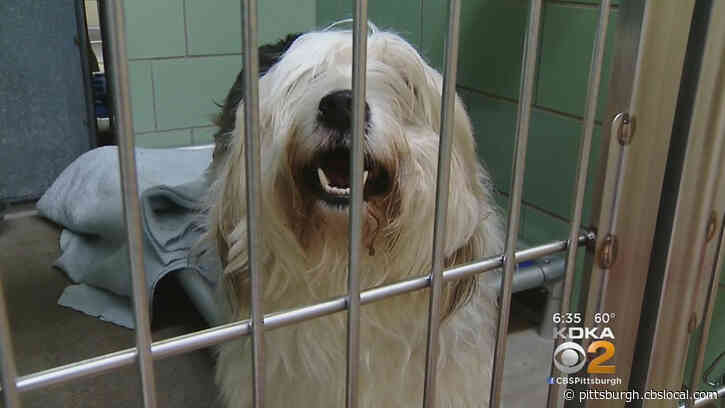 West Virginia Animal Shelter Needs $80,000 To Stay Open