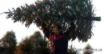 Prices up, selection down: B.C. grapples with Christmas tree shortage