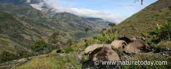 Klimaatverandering bedreigt bioculturele diversiteit op Nieuw-Guinea