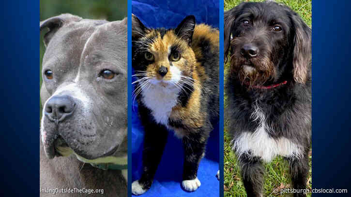 Furry Tails: Lilac, Kellico & Raven Are Waiting For Forever Homes