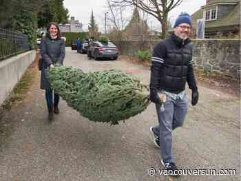 Get your trees early: North American Christmas tree shortage felt in B.C.