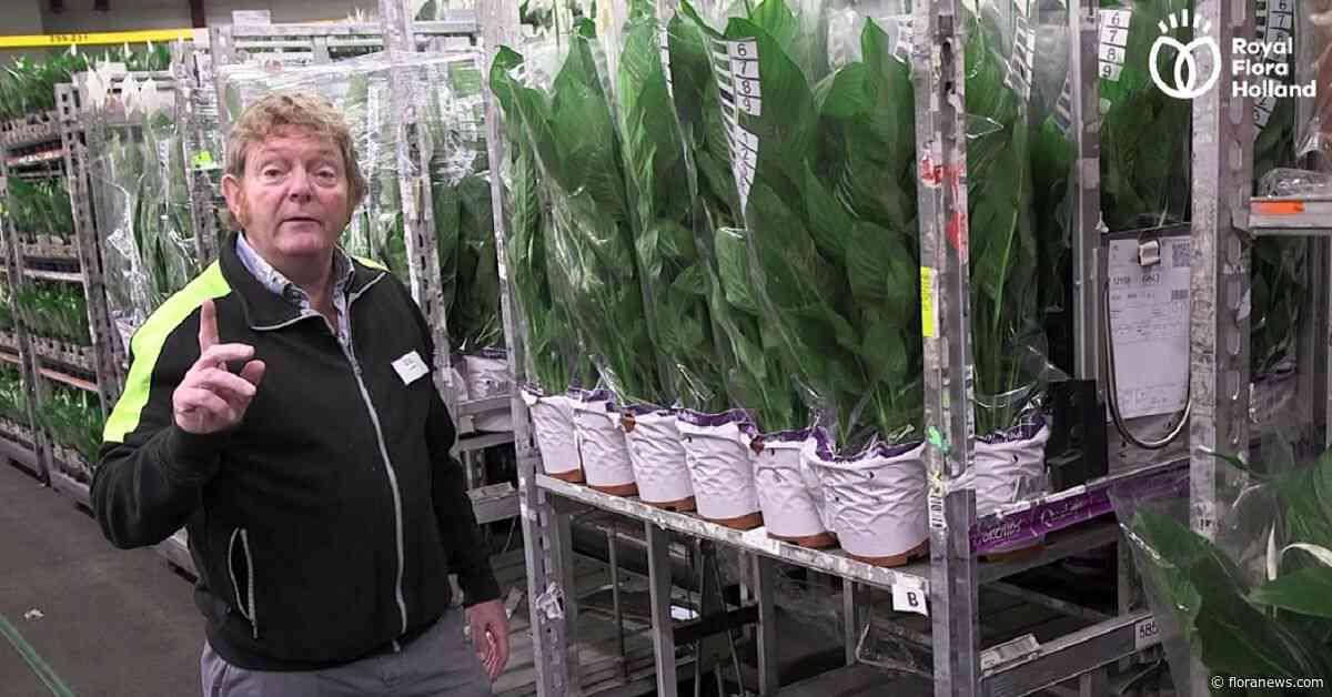Waarom het plantenpaspoort? Veilingmeester Erik Boland vertelt.