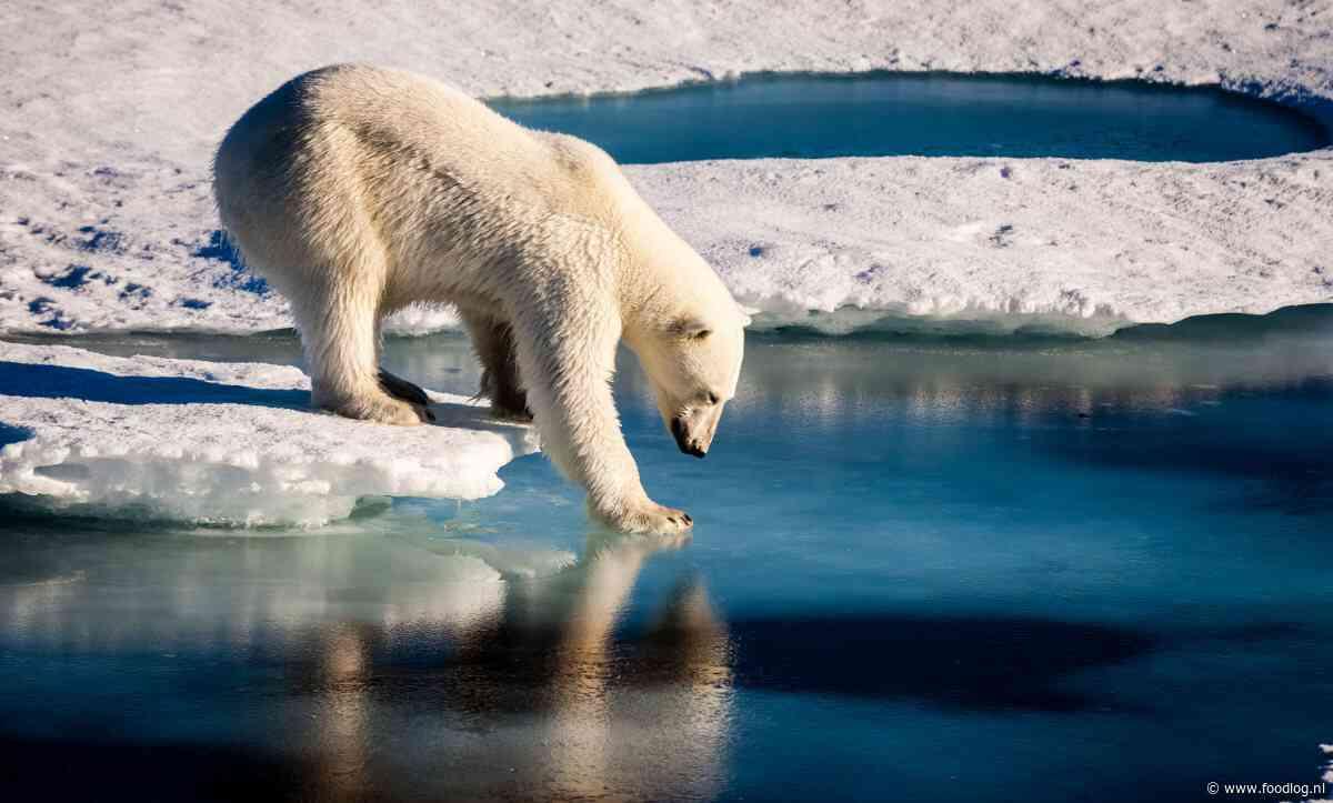 Madrid 2019 - 'alweer een klimaattop'