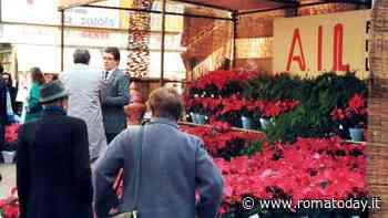 Le Stelle di Natale AIL tornano nelle piazze: dove e quando acquistarle a Roma