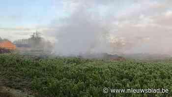 VIDEO. Asbest vrijgekomen bij zware brand in hooistal in Oorbeek bij Tienen