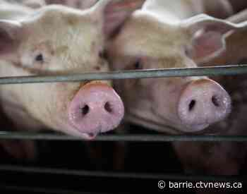 Ontario introduces bill to protect farmers from animal rights activists