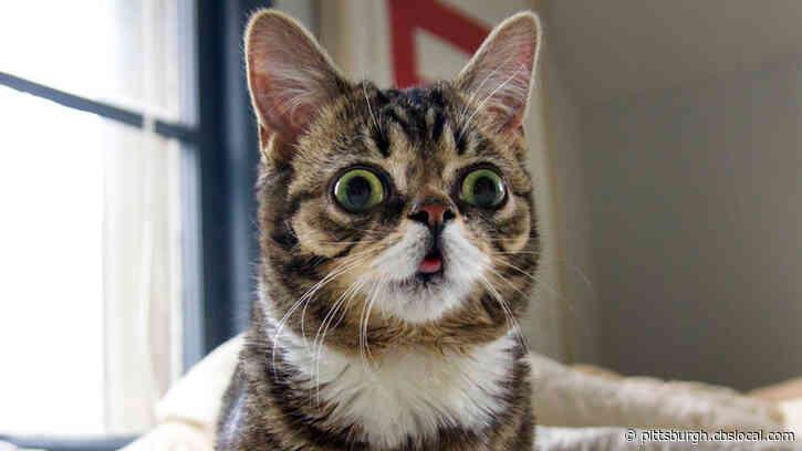 Internet Sensation, 'Lil Bub' The Cat Dies At Age 8