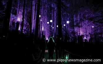 Vallea Lumina: Whistler's enchanted forest