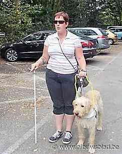 "Blindengeleidehond Angel vermist: ""Ik kan niet zonder hem"""