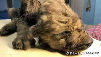 Russian scientists present prehistoric puppy
