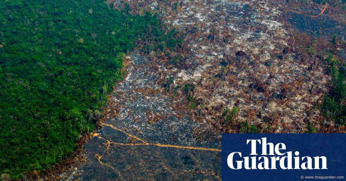 UK firms urge Brazil to stop Amazon deforestation for soy production