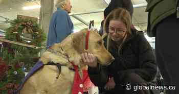 Kingston Police raise money for service dogs that help young victims cope with trauma