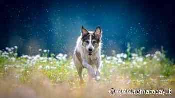 Patentino cani, troppe fake news: arriva il corso formativo dei Veterinari di Roma e provincia