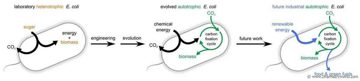 Bacterium forced to evolve to consume carbon dioxide to make biomass