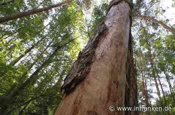 Der Wald siecht langsam dahin