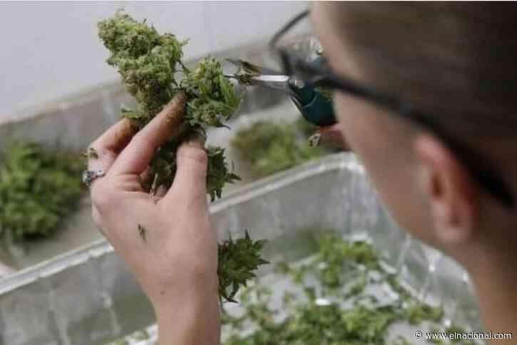 Brasil aprobó la venta de medicamentos elaborados con marihuana