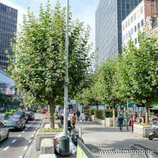 Stad Brussel wil zich met Bomenplan wapenen tegen klimaatopwarming