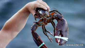 Quebec lobster fishery is thriving, federal report shows