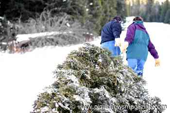 Sea to Sky Christmas tree cutting permits available