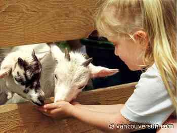 Maple Ridge shutting down unlicensed petting zoo