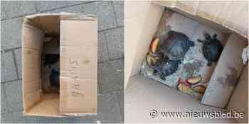 """Anneke vindt schildpadden in kartonnen doos op straat: """"Schaam u diep, eigenaar!"""""""