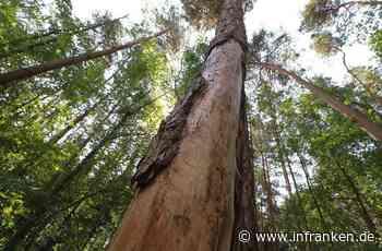 Kreis Forchheim: Der Wald siecht langsam dahin