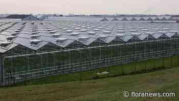 Vakbond FNV eist intrekking cao-wensen werkgevers glastuinbouw