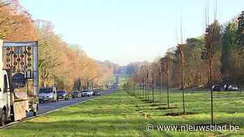 VIDEO. Tervurenlaan wordt opnieuw echte dreef, 500 nieuwe bomen geplant