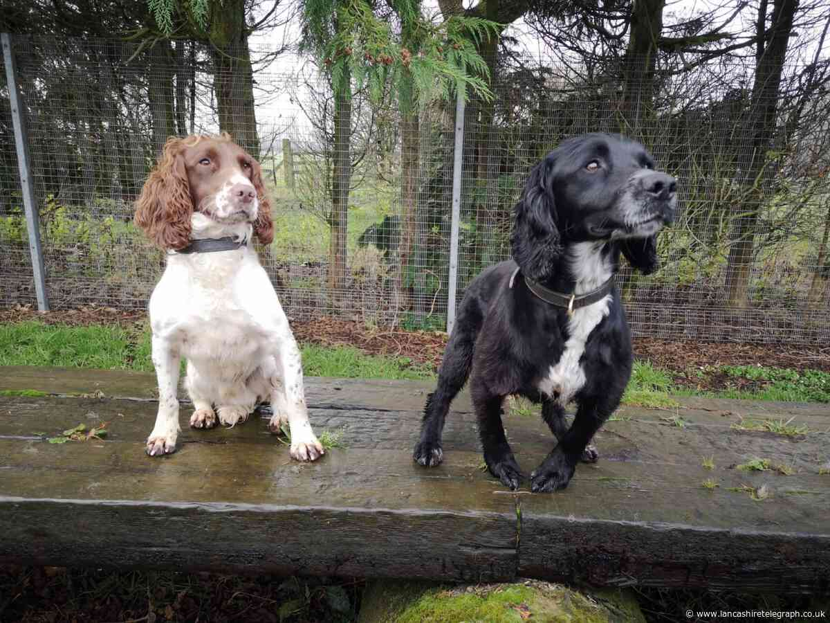 Pawfect pair ready to start fighting crime