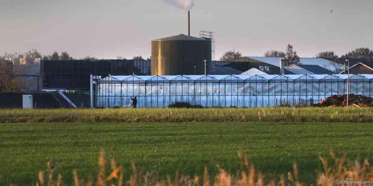 Provincie Friesland verliest bijna een miljoen door failliete glastuinbouwer