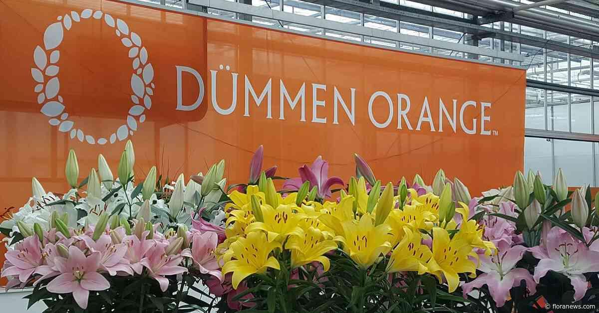 Investering in Dümmen Orange heeft BC Partners nog geen goud opgeleverd