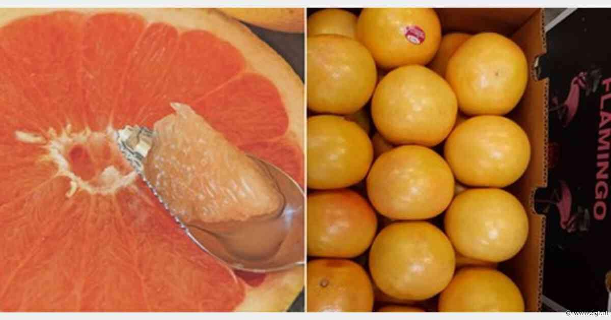 Florida grapefruit onder merk 'Flamingo' aangeboden