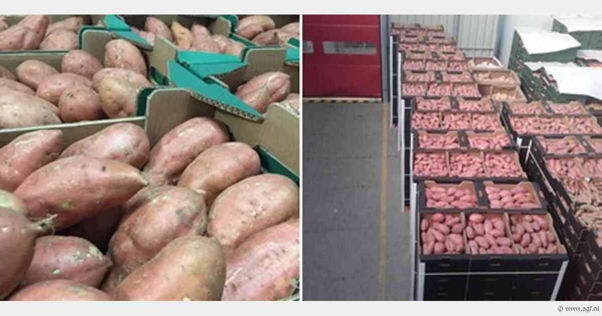 Stabiele prijzen voor de Spaanse zoete aardappelen